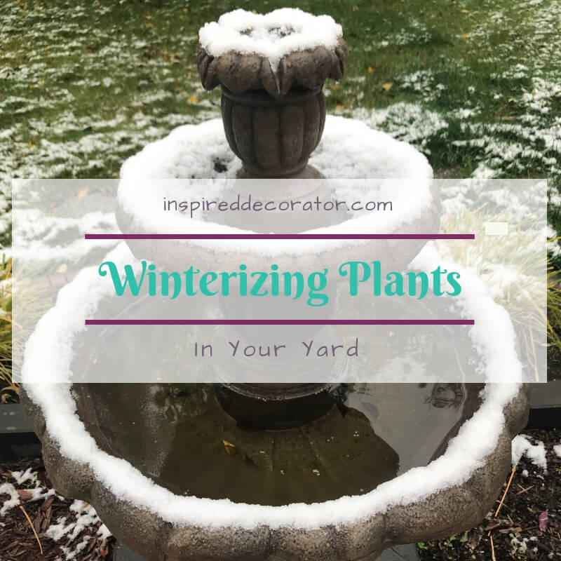 Winter care ideas for your outdoor plants to get them through to next spring. Winterizing plants can help extend their life as well as prepare your yard for the spring melt. By tackling the fall yard cleanup now you make things easier after the snow melts. www.inspireddecorator.com