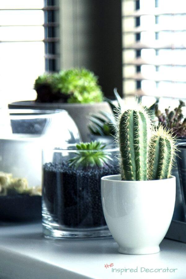 A window ledge is covered in an assortment of succulent plants and dishes.